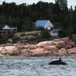 Dos de baleine près du rivage
