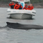 Baleine devant un zodiac
